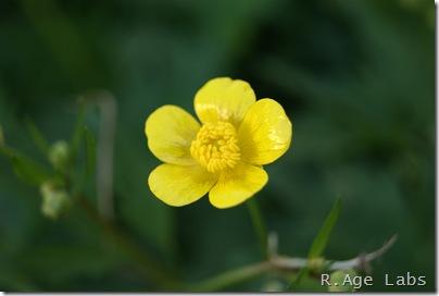 Очередной цветочек