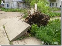 Дерево упало так, что аж вывернуло плиту