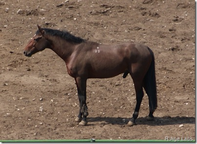 Радостный конь